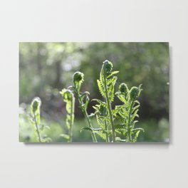 Fiddleheads and Fern Fronds Metal Print