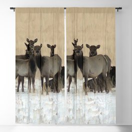 Cow Elk in a Bunch Blackout Curtain
