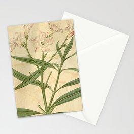 Flower 2032 nerium odorum carneum10 Stationery Cards