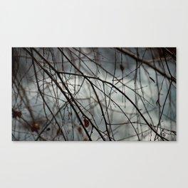 Poland spring Canvas Print