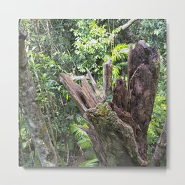 A cyclone damaged tree in the rain forest Metal Print
