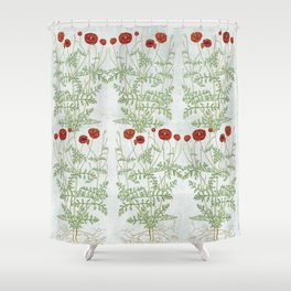 A reminder of past poppies Shower Curtain
