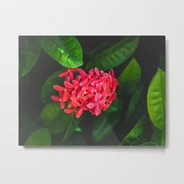 Secret Red Bunch Of Blowers Among Bright Green Leaves Nature Art Metal Print