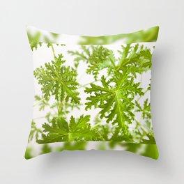 Pelargonium citrosum plant foliage macro Throw Pillow