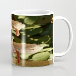 A Funny Sight Cacti Coffee Mug
