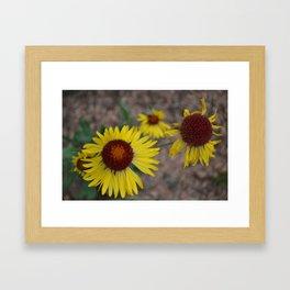Yellow Wild Flower - M Framed Art Print