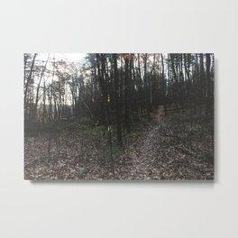 Forest Trail LIX Metal Print