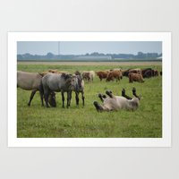 Konik horses - are you ok?? Art Print