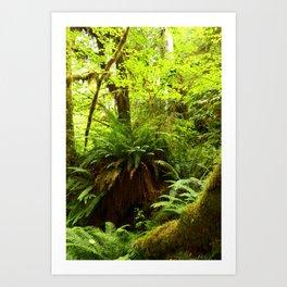 Rainforest Ferns Art Print