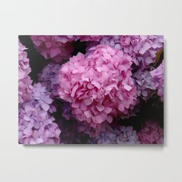 Spring Hydrangeas 3 Metal Print