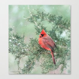 Christmas Bird (Northern Cardinal) Canvas Print