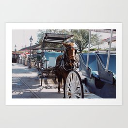 horse in new orleans Art Print