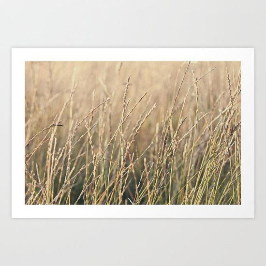 Field in the Sun Art Print