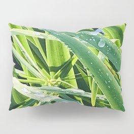 Fine Art Elegant Grass With Rain Drops Close-Up Pillow Sham