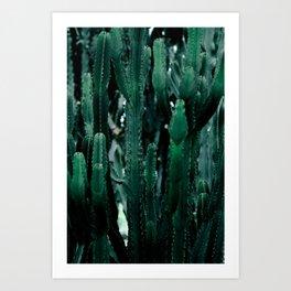 Cactus 07 Art Print