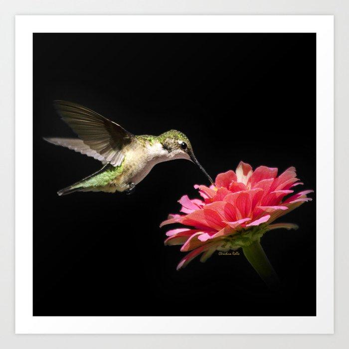 Hummingbird V Art Print