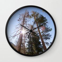 Mountainside Jeffrey Pine Trees (Lower Echo Lake, California) Wall Clock