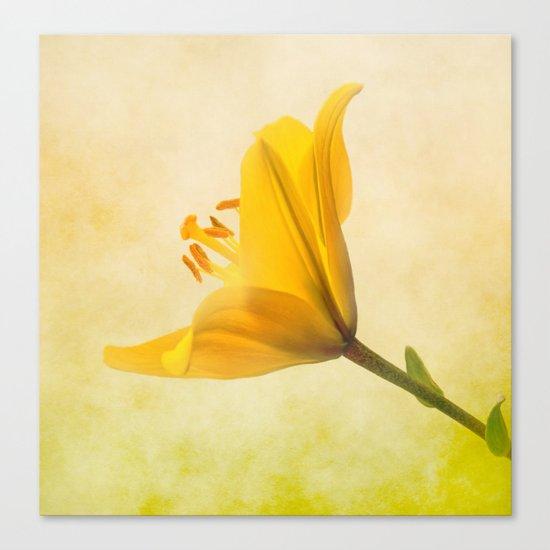 Lemon Lily Canvas Print