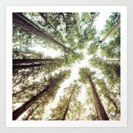 Green Forest Sky Trees Art Print
