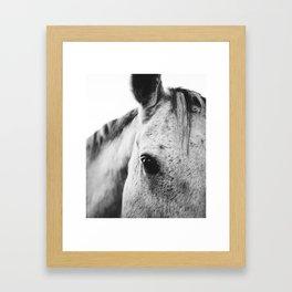 SILVER HORSE Framed Art Print