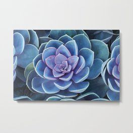 Succulenten purple turquoise Metal Print