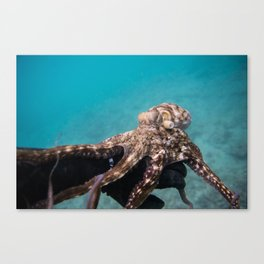 Octopus Holding on Canvas Print