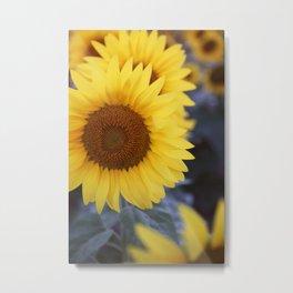 Sunflower #1- Modern Photograph Metal Print