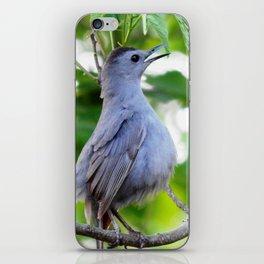 Joyful catbird iPhone Skin