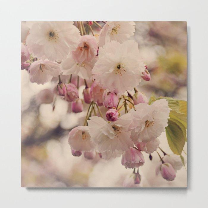 White Cherry Blossom Metal Print