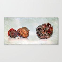 Physalis Part VIIII. Canvas Print