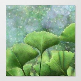 Ginko Biloba Leaves Canvas Print