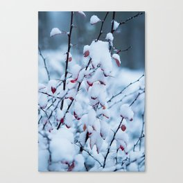Winter Branches 2 Canvas Print