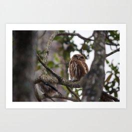 Birds from Pantanal Caburé Art Print