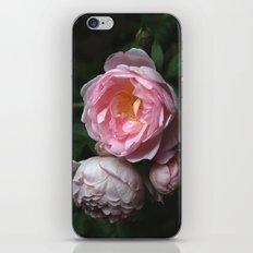 Garden Rose iPhone & iPod Skin