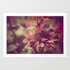 Long Lasting Petals Art Print