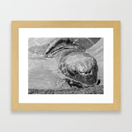 Sea Turtle in Hawaii Framed Art Print