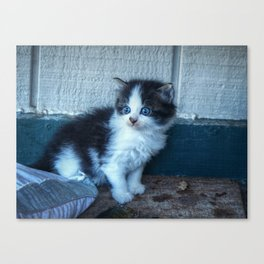 Black + White Kitten Canvas Print
