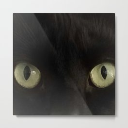 Otto the cat Metal Print