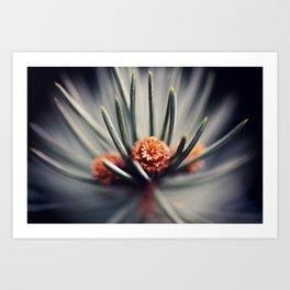 Macro Pine Needles Art Print