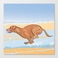 Beach Vizsla Canvas Print