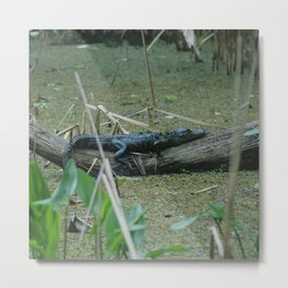 King of the Swamps Metal Print
