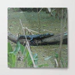 King of the Swamps Metal Print