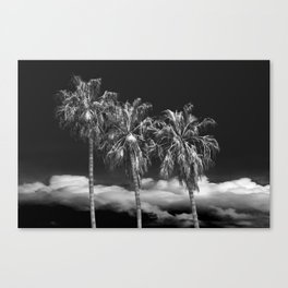 Palm Trees in Black and White on Cabrillo Beach Canvas Print