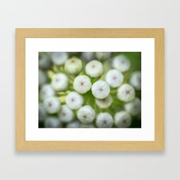 Wht-flowered Milkweed Framed Art Print