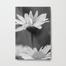 two daisys Metal Print