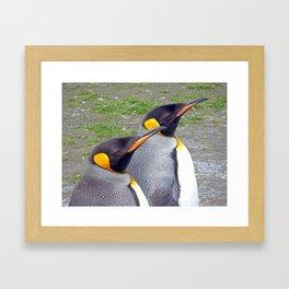King Penguin Heads Framed Art Print