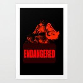 Endangered Tasmanian devil Art Print