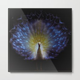 Majestic White Peacock ~ yo͞onəˌvərs Metal Print