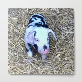 next cute Piglet Metal Print