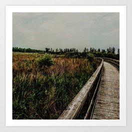 Peaceful walk Art Print